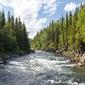Fototapeta las przedzielony rzeką fp 1439