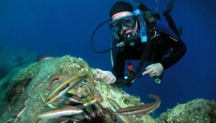 Zapoznanie z nurkowaniem - mysłowice