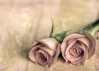 Samotne róże - fototapeta
