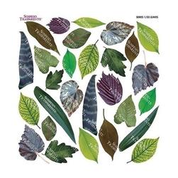 Termofolia do sospeso - leaves - lis