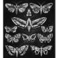 Eleven moths - obraz na płótnie