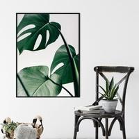 Plakat w ramie - design monstera , wymiary - 70cm x 100cm, ramka - biała