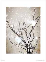 Christmas Icy Branches - plakat premium