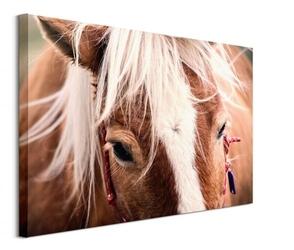 Switzerland horse - obraz na płótnie