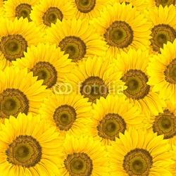 Fotoboard na płycie słoneczniki