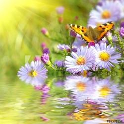 Plakat na papierze fotorealistycznym dwa motyle na kwiaty z refleksji