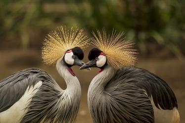Fototapeta ptaki 471