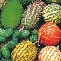 Ciekawe owoce – mix nasion – kiepenerl