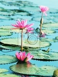 Fototapeta lotous