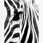 Biała rama aluminiowa 50x100 cm