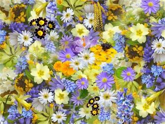 Fototapeta kwiaty 65