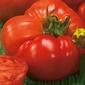 Pomidor country taste f1 – odporny – kiepenkerl