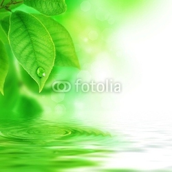 Fotoboard na płycie zielone liście
