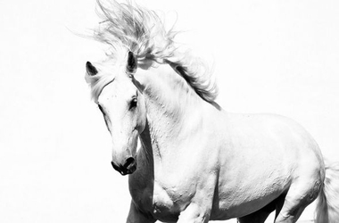Arabski koń - fototapeta