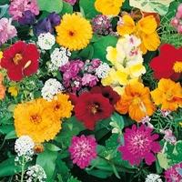 Kwiaty szybko rosnące – mix nasion – kiepenkerl