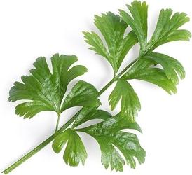Wkład nasienny lingot warzywa liściowe seler