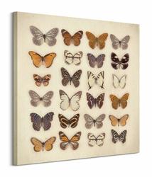 Butterfly Collection - Obraz na płótnie