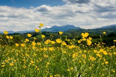 Łąka u podnóża pirenejów - plakat premium wymiar do wyboru: 59,4x42 cm