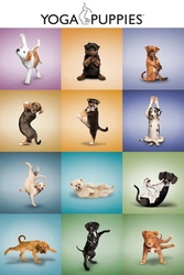 Yoga szczeniaki - plakat
