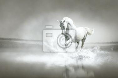 Fototapeta biały koń biegnie przez wody