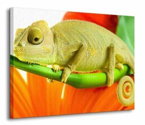 Kameleon, szał barw - Obraz na płótnie