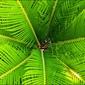 Liść paproci - plakat wymiar do wyboru: 50x40 cm