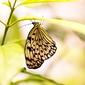 Fototapeta motyl na zielonej gałezi fp 2511