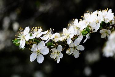 Fototapeta kwiat 357