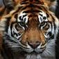 Board z aluminiowym obramowaniem tygrysie oczy