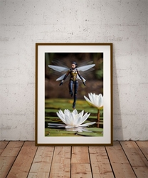 Wasp - plakat wymiar do wyboru: 20x30 cm