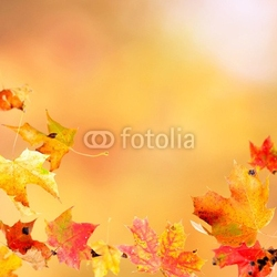 Plakat na papierze fotorealistycznym spadające liście klonu