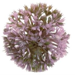 Kwiatowa kula czosnek wyrobowy - wrzosowy - wrzosowy