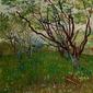 The flowering orchard, vincent van gogh - plakat wymiar do wyboru: 40x60 cm