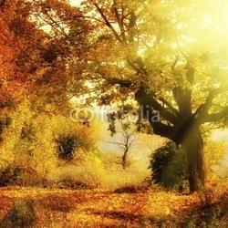 Obraz na płótnie canvas jesienny las z wiązką słońca