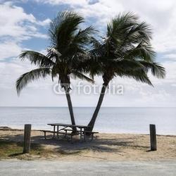 Obraz na płótnie canvas czteroczęściowy tetraptyk Stół piknikowy z palmami na plaży w florida keys, florida,