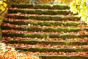 Fototapeta na ścianę jesienne liście na schodach fp 3317