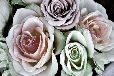 Fototapeta kwiat, róże 372