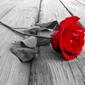 Czerwona róża na deskach pomostu - plakat wymiar do wyboru: 84,1x59,4 cm