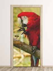 Fototapeta na drzwi papuga p21