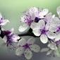 Obraz zjawiskowe kwiaty fp 732 p