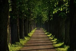 Fototapeta na ścianę droga osłonięta drzewami fp 3394