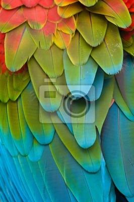 Fototapeta kolorowe upierzenie ara