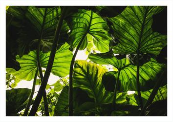 W cieniu liści - plakat Wymiar do wyboru: 30x20 cm