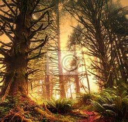 Obraz rain forest