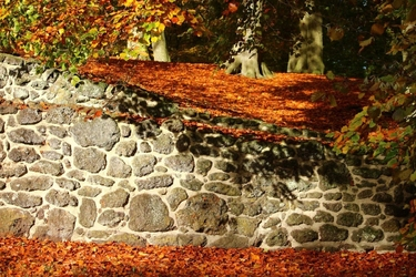 Fototapeta na ścianę pomarańczowo złociste liście fp 3316