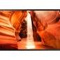 Samsung monitor profesjonalny 55 om55n