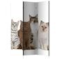 Parawan 3-częściowy - słodkie kotki room dividers