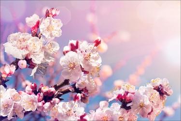 Fototapeta kwiaty 2217