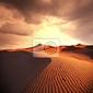 Obraz wydma