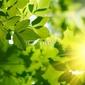 Naklejka samoprzylepna zielone liście z promieni słonecznych.
